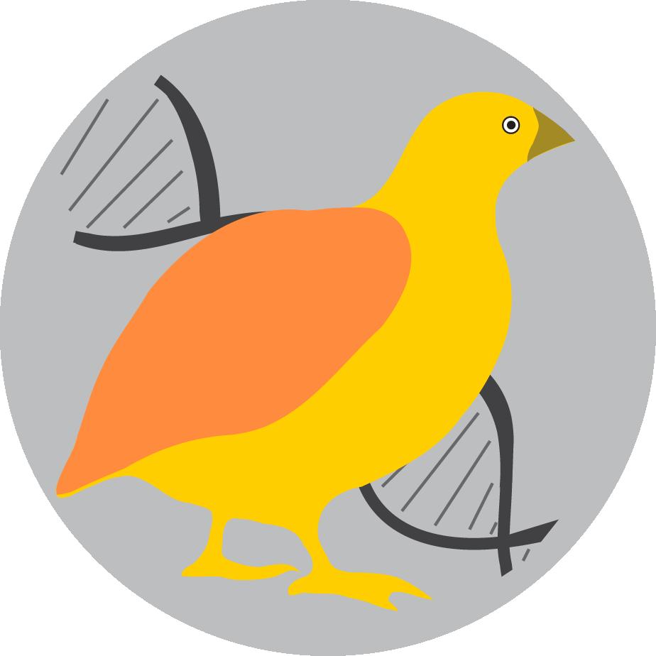 QuailDB Logo